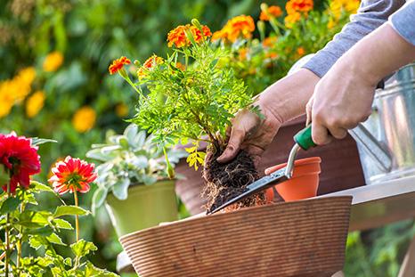 Gardening Swap Point Cook
